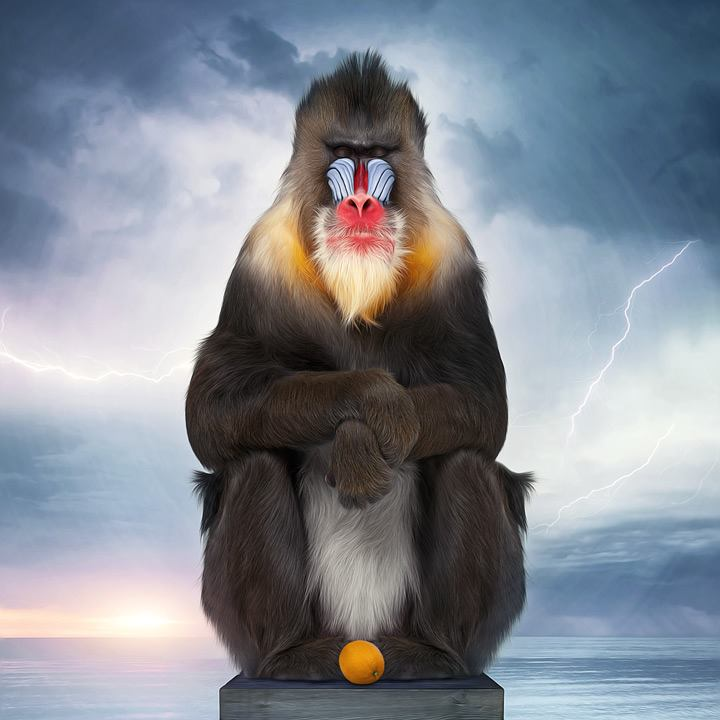 Animals Project by Murat Sayginer