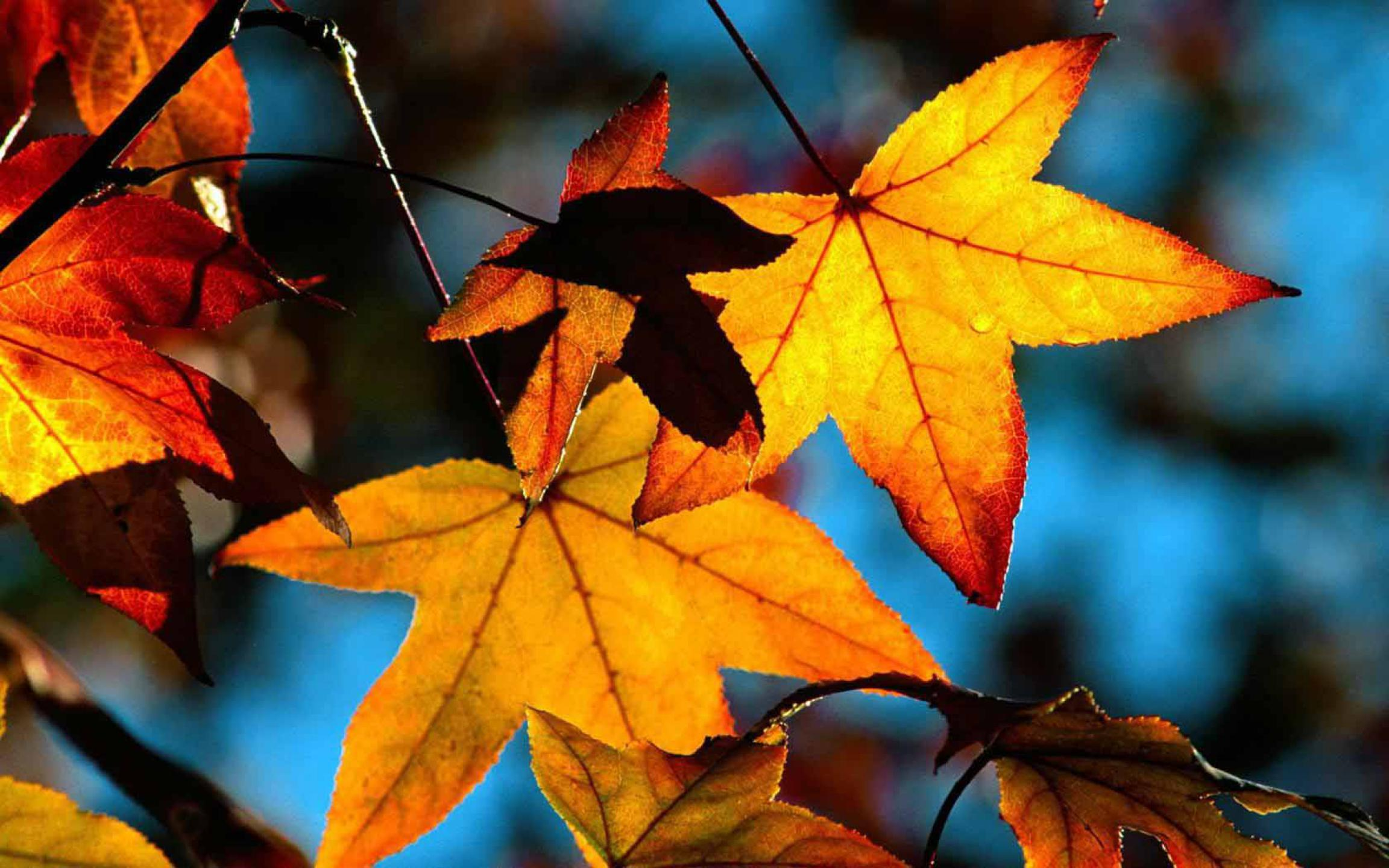 Autumn Wallpaper Selection