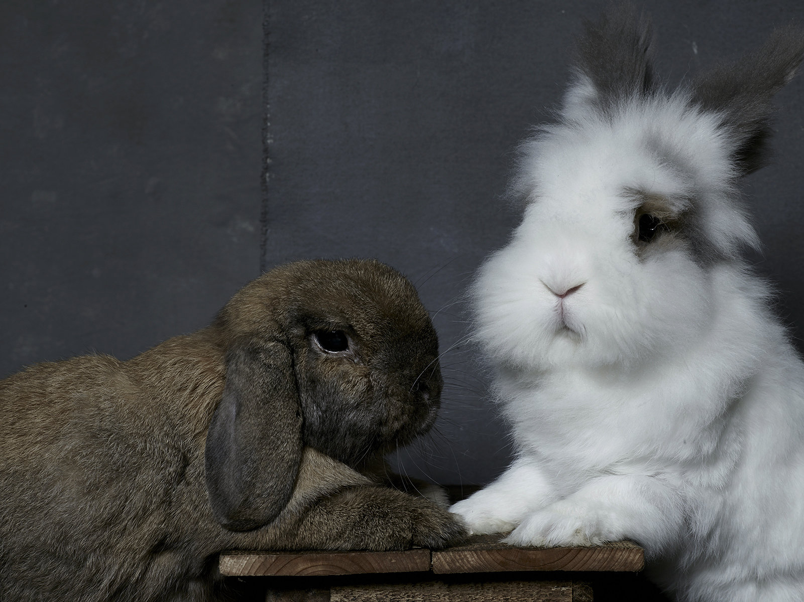 Bunny Hop Portraits by Noah and Daniel - Vogue