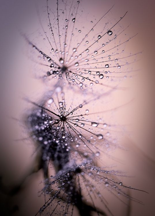 Macro Photography by Andrea Gulickx