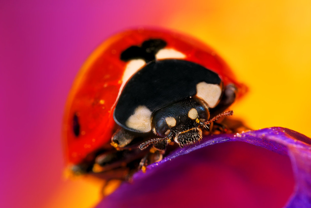 Macro Photography by Boris Godfroid