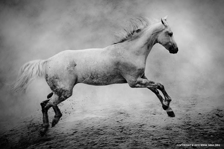 Photography by Dimitar Hristov