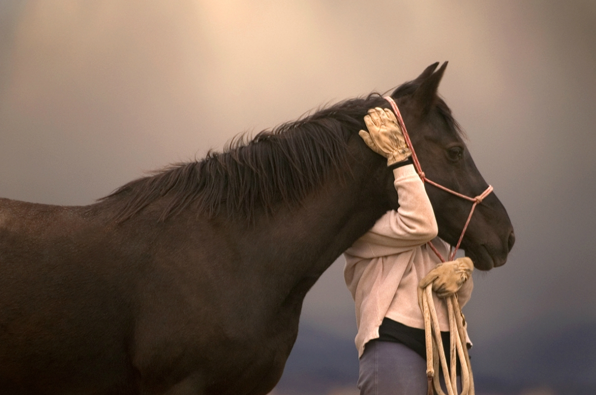 Horses we love by Lourie Zipf