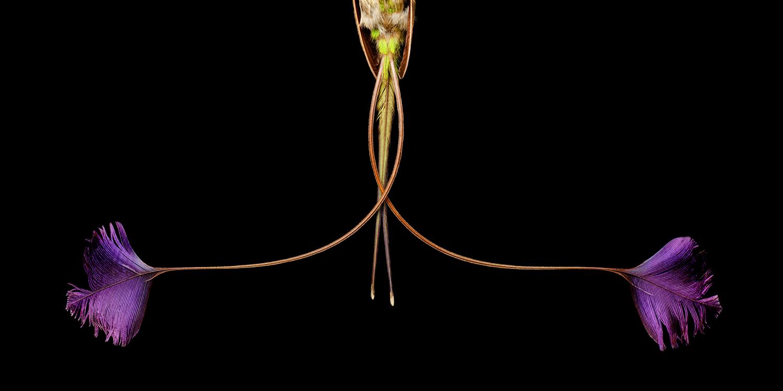 Conceptual Photography by Mark Laita