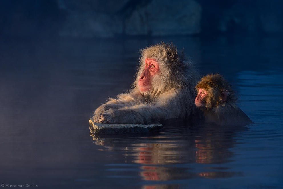 Wildlife Photography by Marsel van Oosten