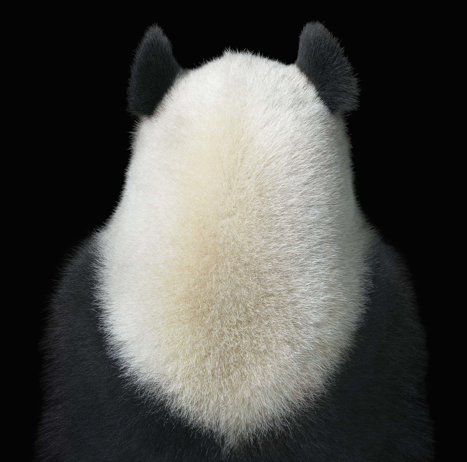 More than human by Tim Flach