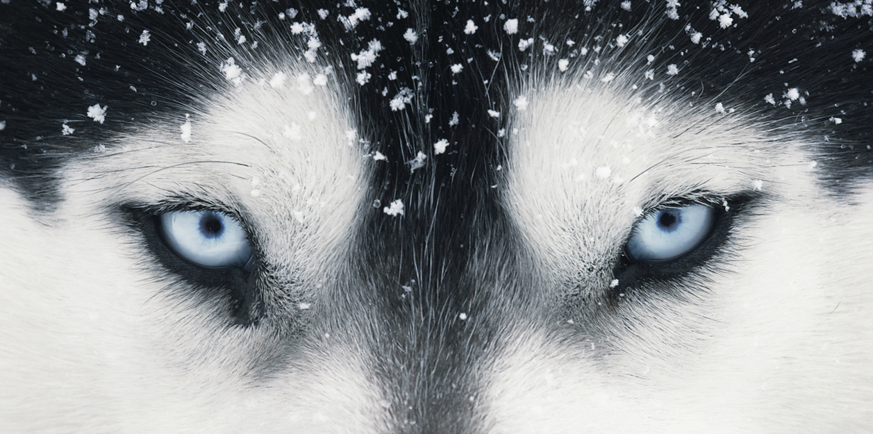 Dog Gods by Tim Flach
