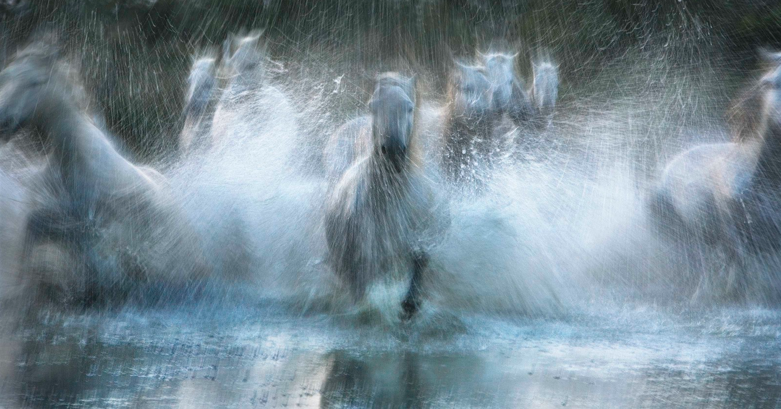 Equus by Tim Flach